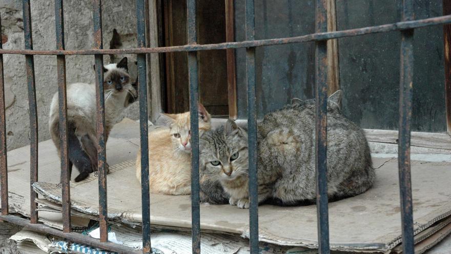 Juzgan a dos personas para las que piden cárcel por envenenar a ocho gatos de su vecina