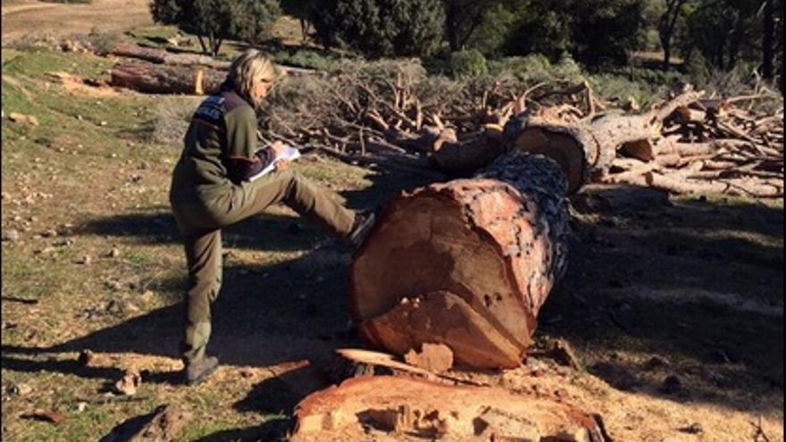 Los forestales han detectado talas masivas en la Sierra Oeste de Madrid / UGT-Forestales