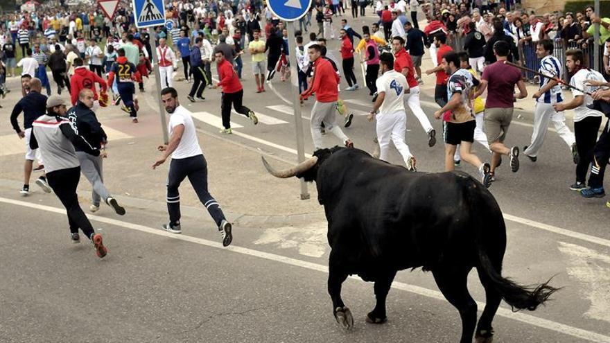 Los vecinos de Tordesillas se manifiestan en defensa del Toro de la Vega