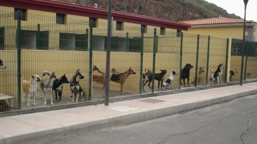 Centro de atención de animales de Valle Colino, en La Laguna