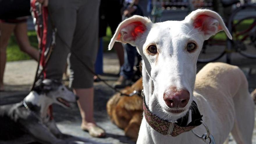 Los humanos tienen más empatía por perros maltratados que por otros humanos