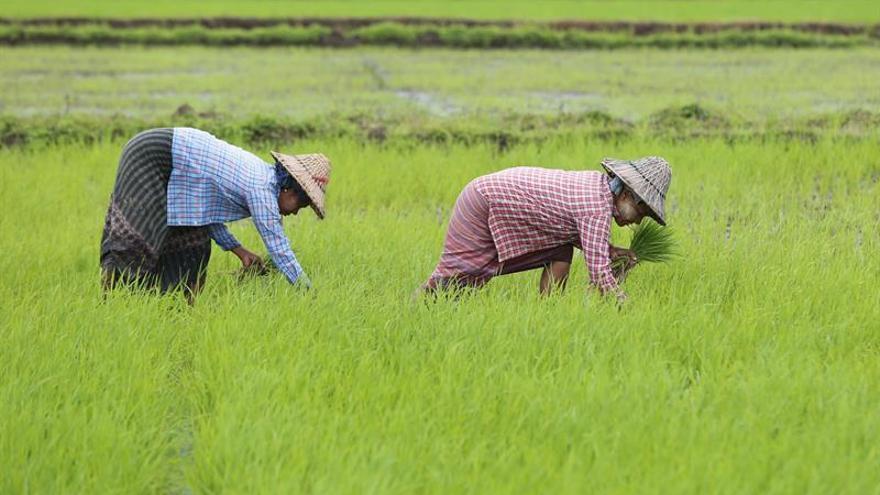 La CE pone en marcha una investigación sobre las importaciones de arroz
