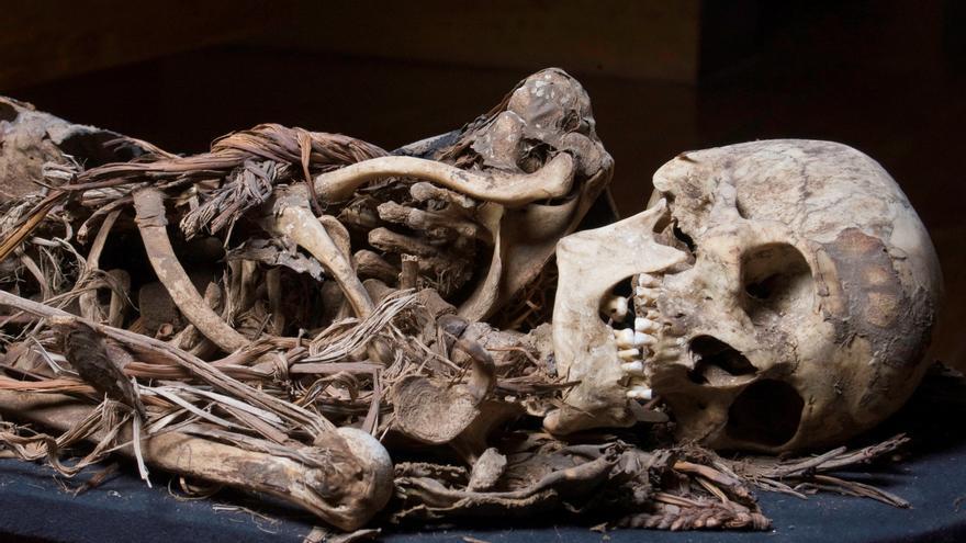 ¿Eran las momias la élite de la sociedad canaria? Sus dientes dicen que no