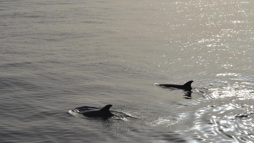 En la imagen, dos delfines avistados desde la embarcación Fancy II.