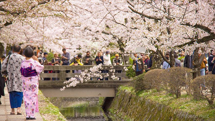 Sakura en Japón