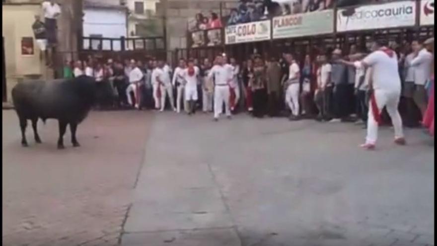 Captura del vídeo difundido por Pacma, segundos antes de la ejecución del toro Escribano, en Coria (Cáceres)