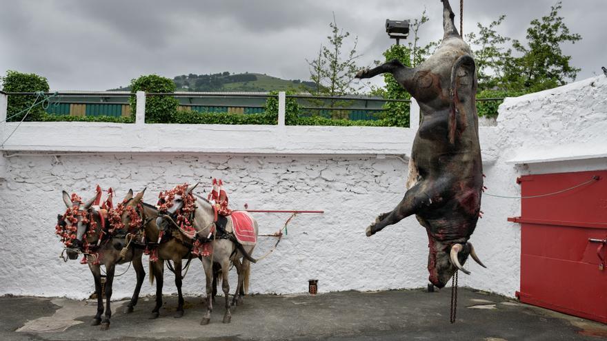 El toro, colgado de una de sus patas tras la lidia en Azpeitia. Al fondo, los caballos víctimas también del festejo. Foto: Askekintza/Tras Los Muros