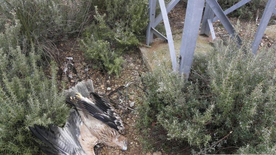Agentes Medioambientales alertan del número de aves que mueren electrocutadas