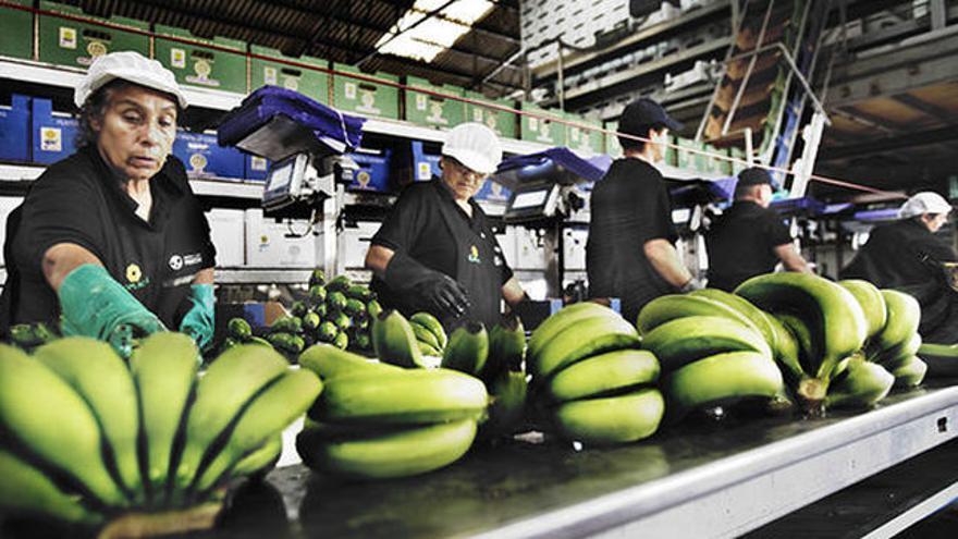 Empaquetado de plátanos, en una imagen de archivo