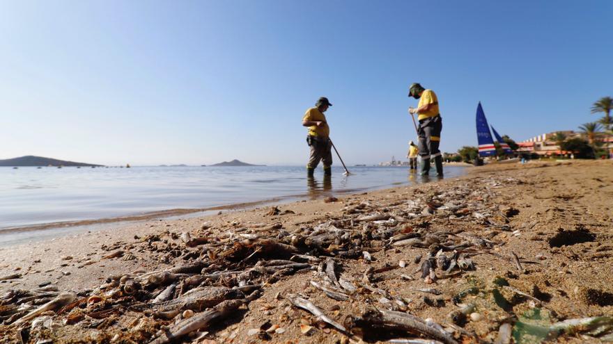 Operarios retiran del mar los peces muertos que han aparecido en las playas del Mar Menor en Murcia