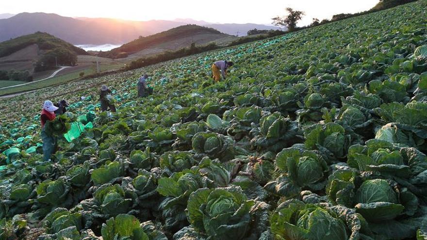 Corea del Norte llama a mejorar las cosechas y las capturas para superar las sanciones