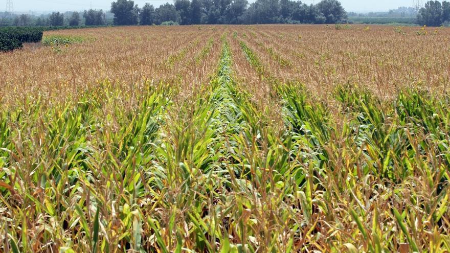 C-LM anuncia un frente común con las 168 comunidades de regantes que garantice la rentabilidad de la agricultura