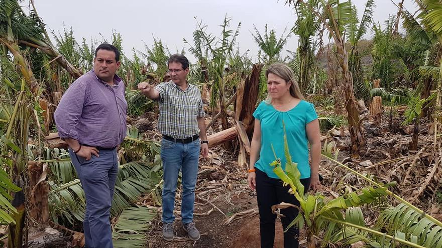 José Adrián Hernández (c), consejero de Agricultura  y vicepresidente del Cabildo de La Palma; Alicia Vanoostende, consejera del área del Gobierno de Canarias; y Basilio Pérez, director general de Agricultura, el pasado lunes, en una finca de plátanos afectada por el fuerte viento.