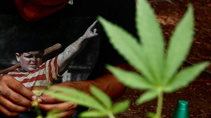 El Supremo mexicano tumba la prohibición del consumo lúdico de marihuana