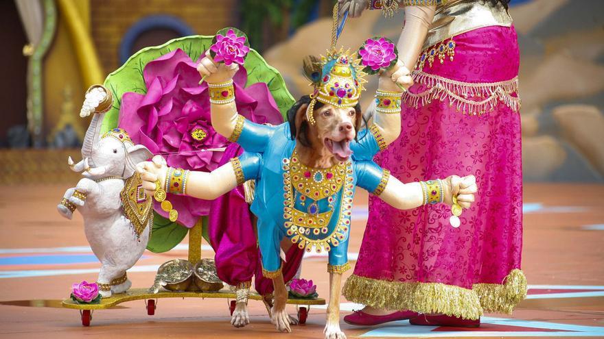 El perro Ashé con su fantasía de 'Om, el divino Brahman'. FOTO: www.lpacarnaval.com