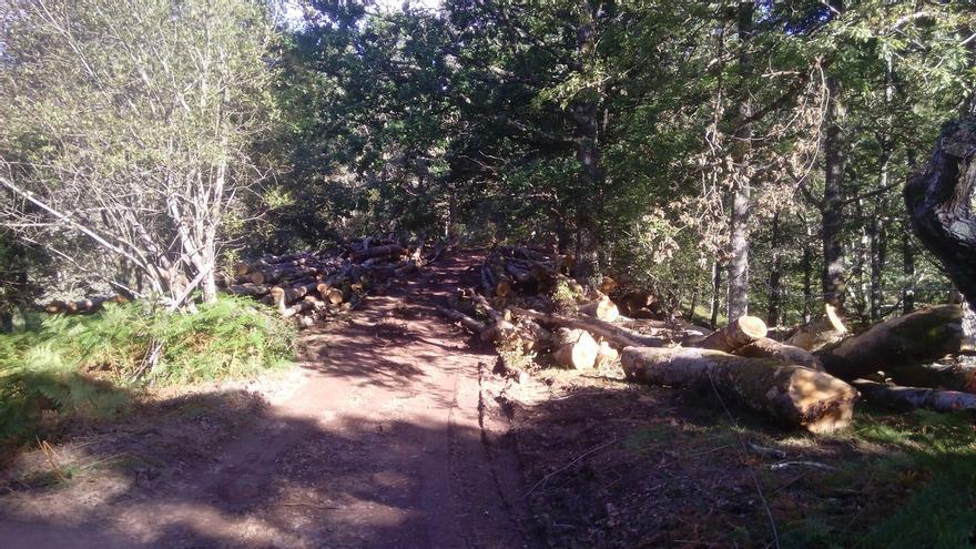Ecologistas denuncian una nueva tala de hayas en el Parque Natural Saja-Besaya