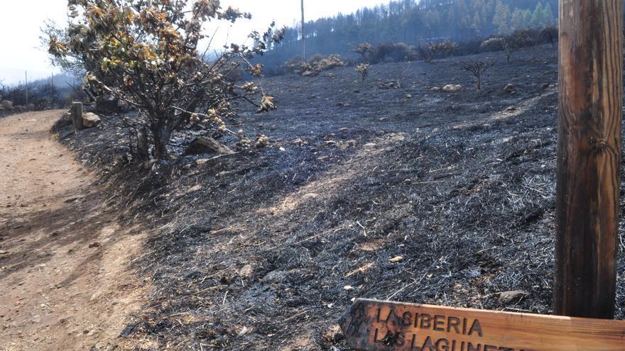 Zona de Las Lagunetas arrasada por el fuego