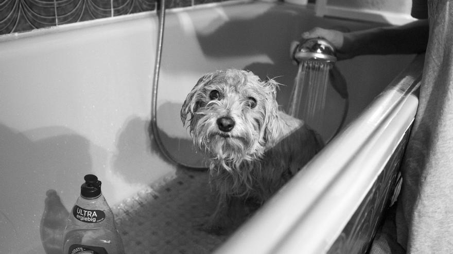 Emilito recibiendo su primer baño tras ser rescatado.