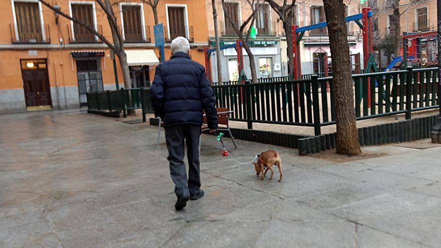 Un hombre pasea en un perro en la Plaza Dos de Mayo   SOMOS MALASAÑA
