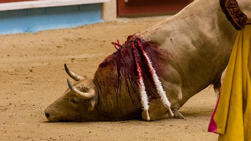 Tauromaquia: humillación y tortura