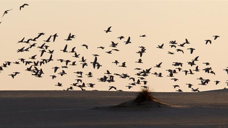 El Gobierno celebra que UNESCO reconozca su esfuerzo por salvar Doñana