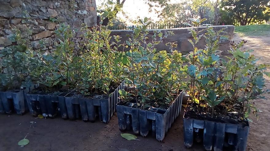 Especies autóctonas para llenar de vida la Sierra de Gata / Foto: JCD