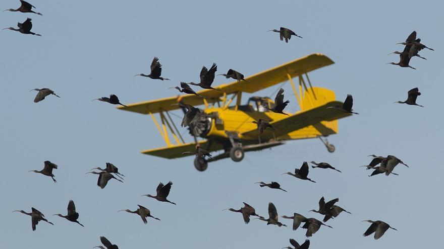 Aves sobre el cielo de La Janda.