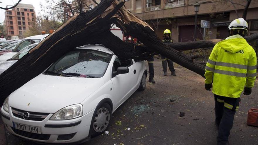 Cortan una calle de Valencia por la caída de un árbol, sin causar heridos