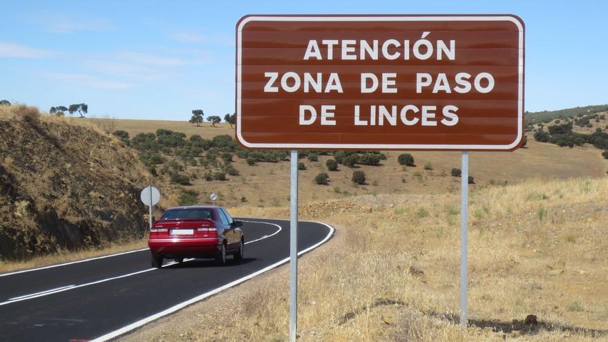"""Fomento asegura """"colaboración permanente"""" con Junta andaluza para mejorar la permeabilidad de carreteras a los linces"""