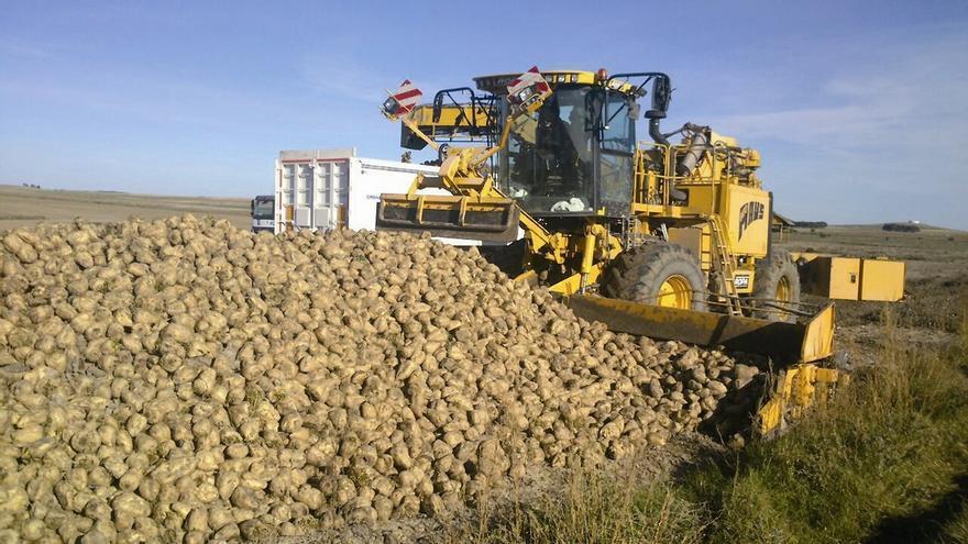 COAG pide que no se demore el pago acoplado estatal al cultivo de remolacha