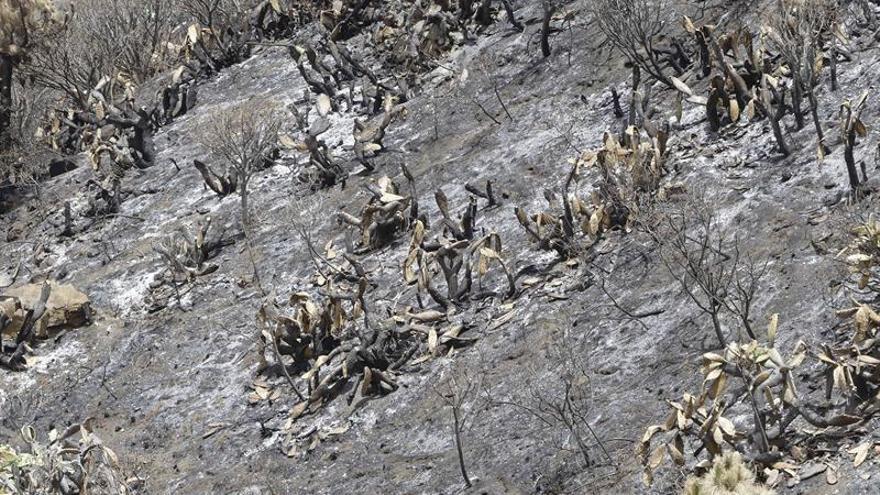 Una de las zonas quemadas por el incendio de La Palma