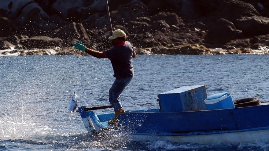 En vigor la nueva regulación restrictiva de la captura de cebo para los pescadores recreativos