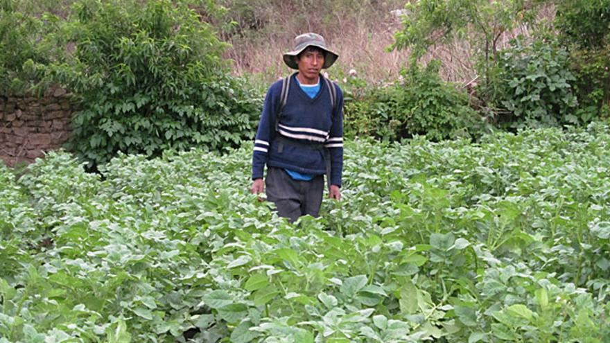 Zacarías es agricultor en Tarvita (Sucre). Foto: Proagro