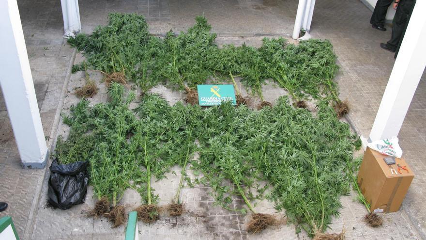 Las 15 matas de marihuana incautadas arrojaron un peso de 21,780 kilos. Foto: Guardia Civil.