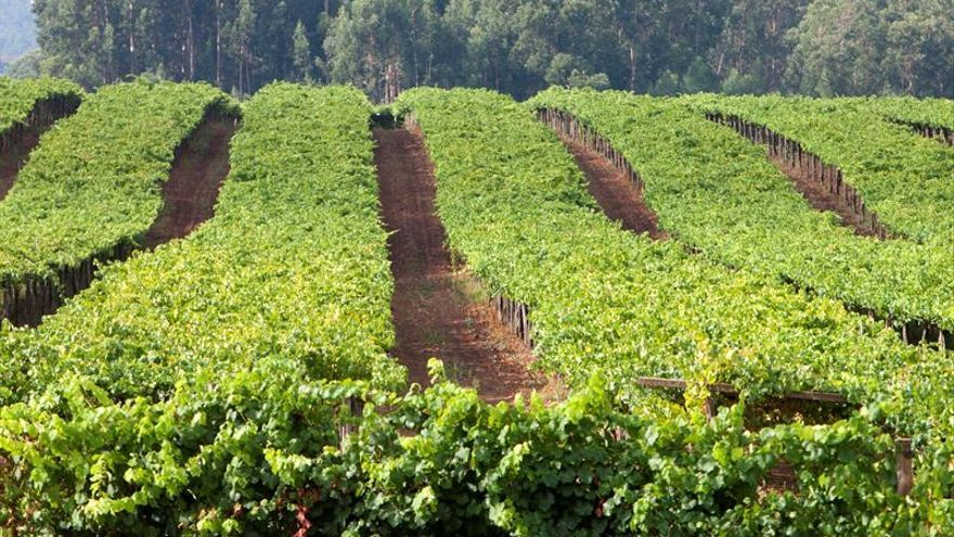 España será la segunda potencia mundial de vino pese a la caída del 20 % de la cosecha