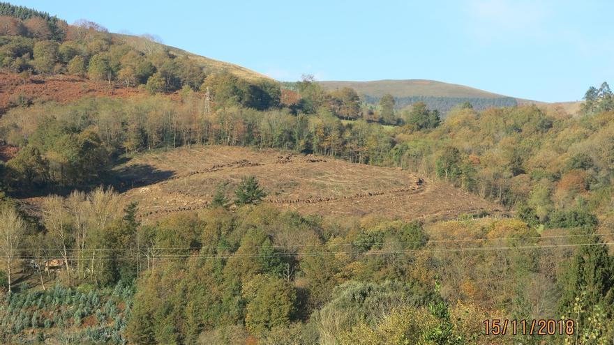 Colectivos denuncian la tala de más de 40 robles en Terán de Cabuérniga