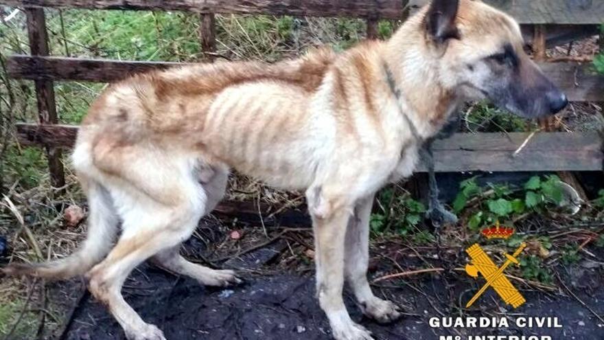 Detenido por maltrato animal el dueño de un perro con desnutrición extrema y llagas