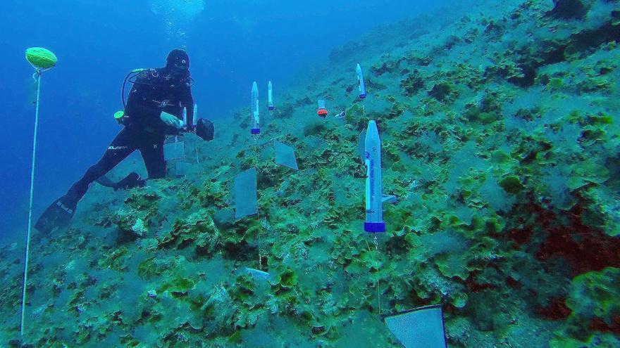 Investigación submarina en la zona de la Macaronesia