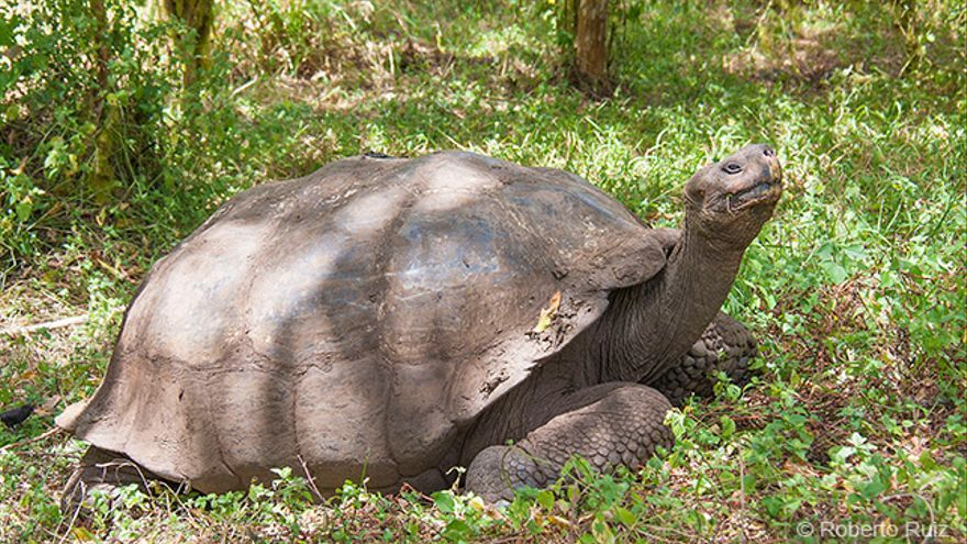 Islas Galápagos, tortuga gigante