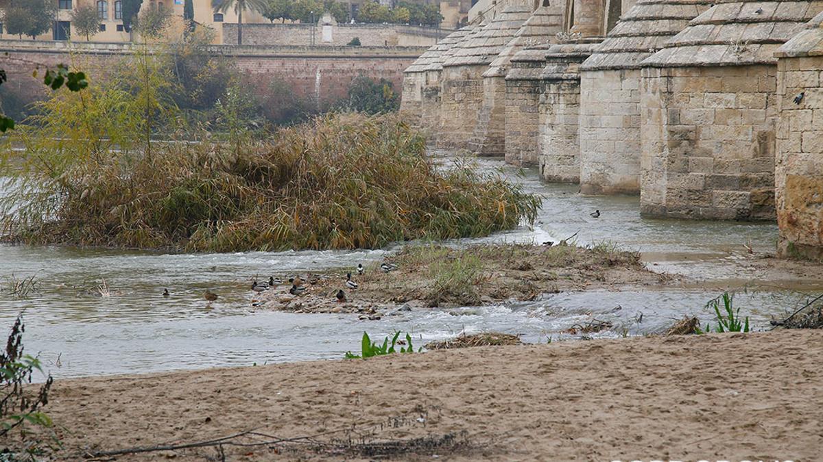 La sequía se hace visible en el paso del río Guadalquivir por el Puente Romano de Córdoba