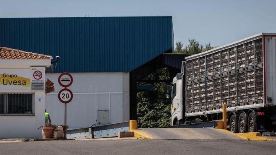 Un camión cargado de pollos a la entrada de las instalaciones de Uvesa en Rafelbunyol.