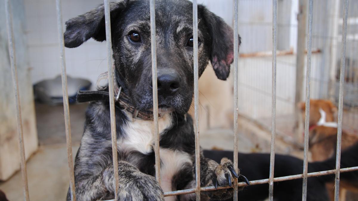 Cachorro abandonado en una perrera valenciana.