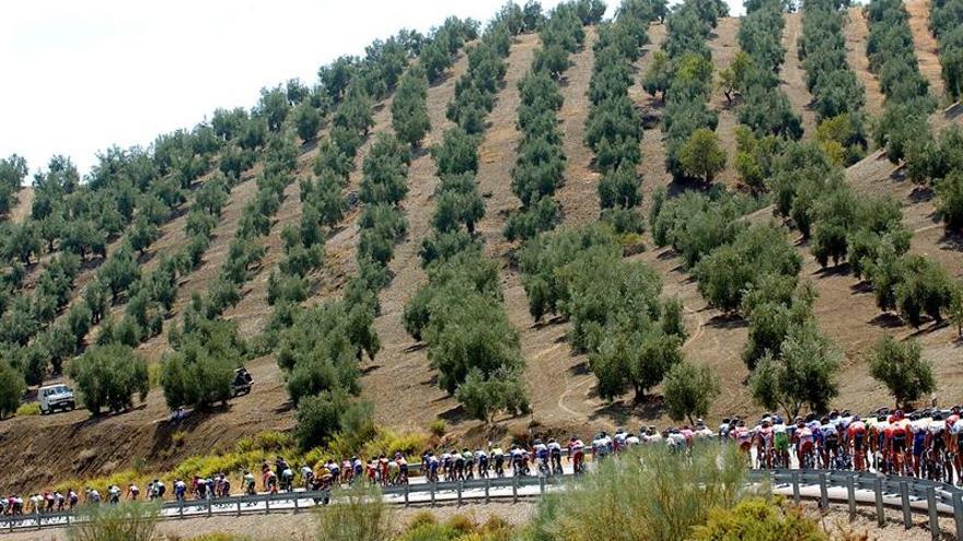 La CE pide a Italia actuar contra la expansión de la bacteria que mata olivos