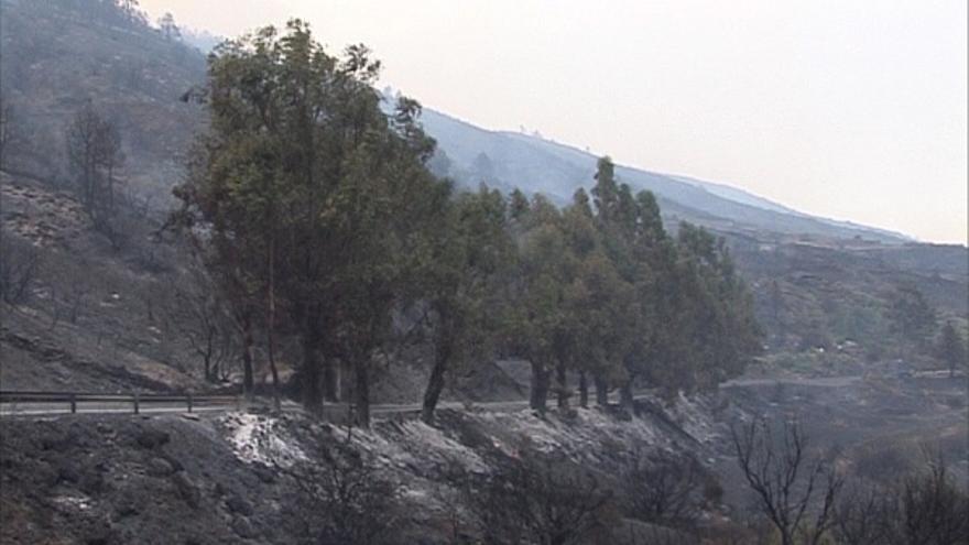 Del incendio de La Palma (II) #7