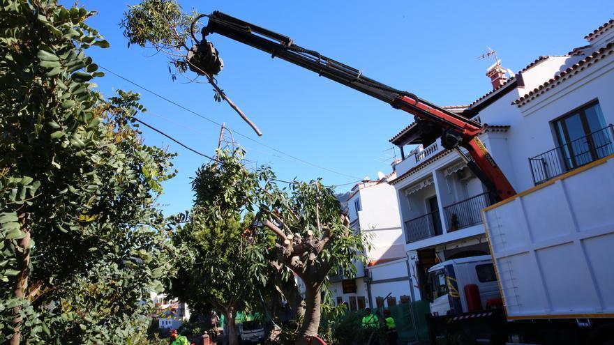 Maquinaria empleada para la retirada de árboles. (Alejandro Ramos).