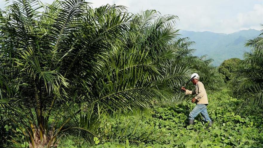 """La """"fiebre"""" del aceite de palma en Perú amenaza la Amazonia ancestral"""