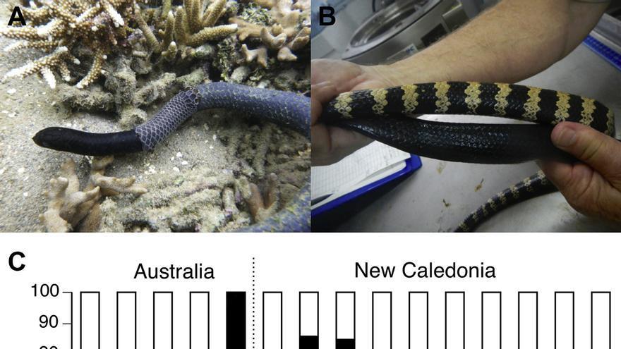 Las serpientes han perdido sus bandas blancas por culpa de la contaminación