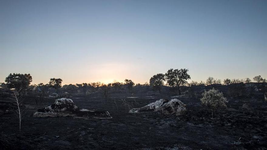 Detenidos dos hombres como supuestos autores del incendio de Cáceres