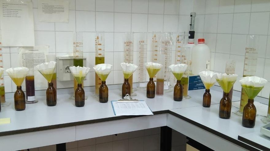 Científicos andaluces identifican variedades de olivo con alto contenido en vitamina E
