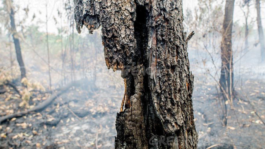 Incendios en la zona de las turberas en Palangka Raya, provincia de Kalimantan Central. Estos incendios son una amenaza para la salud de millones de personas  Ardiles Rante - Greenpeace